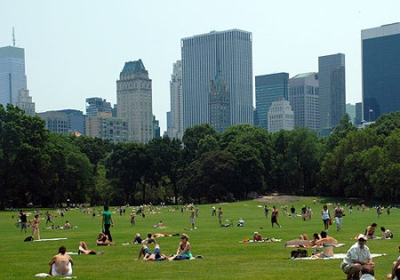 sheep-meadow-l